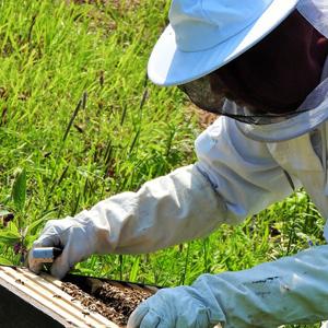 養蜂家の画像、ミツバチは有益な虫